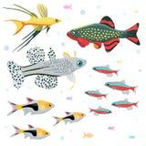 Akvariefiskar: den stora samlingen av högt detaljerade illustrationer med den tropiska behållaren fiskar vektor illustrationer