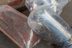 Akvariefiskar packade i en plastpåse som var till salu i en marknad in royaltyfri fotografi