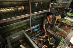Akvariefiskmarknad i Yogyakarta, centrala Java, Indonesien Royaltyfria Bilder