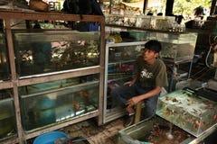 Akvariefiskmarknad i Yogyakarta, centrala Java, Indonesien Royaltyfri Foto