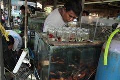 Akvariefiskmarknad i Yogyakarta, centrala Java, Indonesien Fotografering för Bildbyråer
