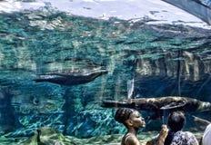 Akvariet Royaltyfri Bild
