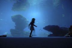 akvariet går royaltyfria bilder