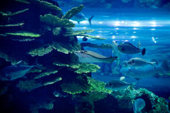 Akvariet i Dubai Arkivfoton