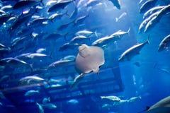 Akvariet i Dubai Royaltyfri Bild