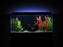 akvarium Arkivbilder