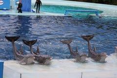 akvarium 2 Royaltyfri Bild