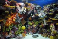 Akvarium Fotografie Stock Libere da Diritti