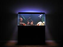 akvarium Royaltyfri Bild