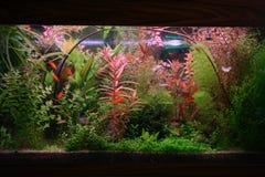 akvarium arkivfoton