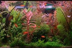 akvarium Fotografering för Bildbyråer
