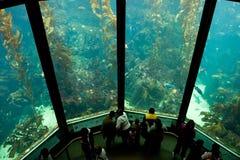 akvarium 3 Royaltyfria Bilder