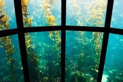 akvarium 3 Arkivbilder