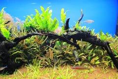 Akvarium. Royaltyfri Foto
