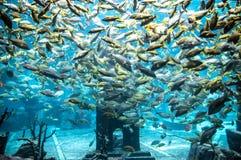 Akvarium Royaltyfri Fotografi