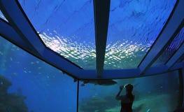 Akvarium 029 Royaltyfria Bilder