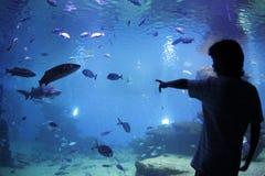 Akvarium 024 Arkivbild