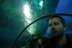 Akvarium Royaltyfri Foto
