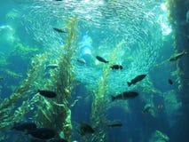 Akvarium Arkivbild