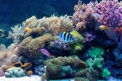 akvarium Royaltyfria Foton