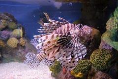 akvarium Arkivfoto
