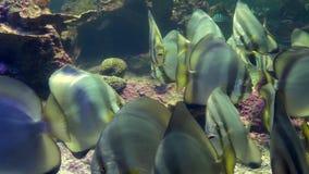 Akvarium av Genua, tropiska fiskar arkivfilmer