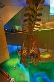 akvarium baltimore Arkivfoto