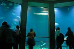 akvarium baltimore Arkivfoton