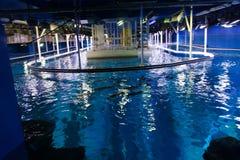 Akvarium Dubai Arkivbild