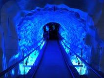 Akvarium för havsliv, Auckland, Nya Zeeland Royaltyfri Foto