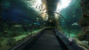 Akvarium för Sochi upptäcktvärld arkivfilmer