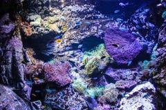 Akvarium för vatten- djur för Australien Sydney museum Arkivbilder