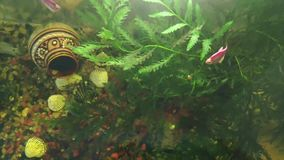 Akvarium f?r videogem som skjutas fr?n ?ver med hj?lpen av en telefon med j?st vatten, alger, en tillbringare, skal och sandkisel stock video