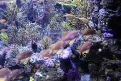 Akvarium i Barcelona, Spanien royaltyfria bilder