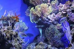 Akvarium i Barcelona, Spanien royaltyfria foton