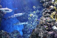Akvarium i Barcelona, Spanien arkivfoton