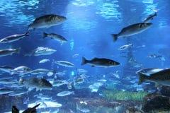 Akvarium i Barcelona, Spanien arkivfoto