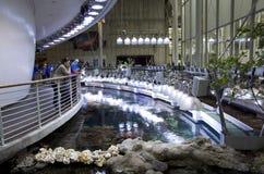 Akvarium i den Kalifornien akademin av vetenskaper royaltyfria foton