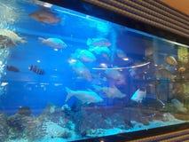 Akvarium i den Mushriff gallerian Abu Dhabi UAE Royaltyfria Bilder