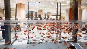 Akvarium i gallerian - Tokyo - Japan Arkivfoton