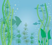 Akvarium med fisken Arkivbilder