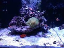 Akvarium med fisken Royaltyfri Foto