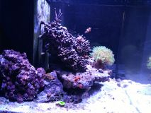 Akvarium med fisken Arkivfoton