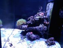 Akvarium med fisken Royaltyfri Bild