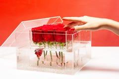 Akvarium med fisken och rosor blommaillustrationen shoppar smellcomp Förälskelse och passion röd rosa bukett i ask aktuell s vale royaltyfri fotografi
