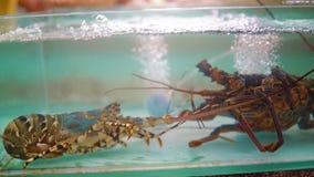 Akvarium med hummer i matmarknaden Asiatisk restaurang med skaldjur stock video