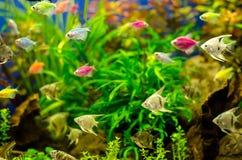 Akvarium med många kulör fisk royaltyfria bilder