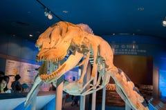 Akvarium och museum som lokaliseras i port av Nagoya, valskeleto Arkivfoto