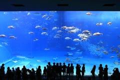 akvarium okinawa royaltyfria foton