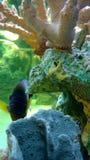 Akvarium på gallerian Royaltyfria Foton